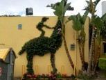 Giraffryttare.